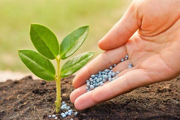 Consumption of phosphorus fertilizers per hectare is 52 times higher in Uzbekistan than in Kazakhstan, nitrogen fertilizers - almost 90 times